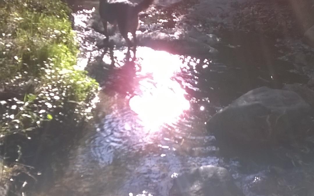 La luz amorosa (o el encanto de los animales)