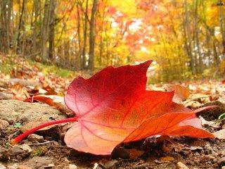 Las hojas no caen… se sueltan.