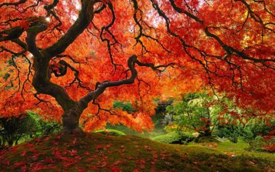 Las hojas no se caen, se sueltan